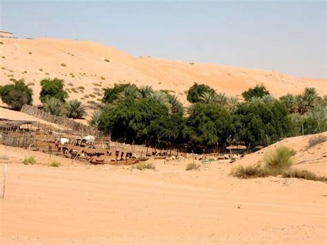 Michael's Lousy Home Page: Trips in the Middle East: Liwa