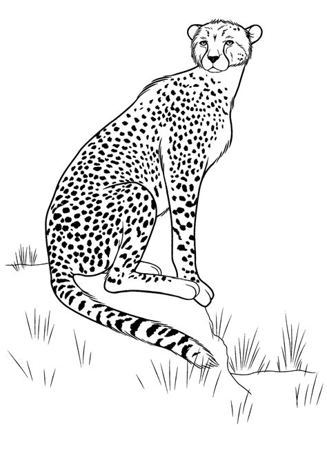 Coloring page - Cheetah on the hunt