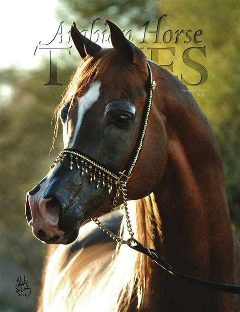 Arabian Horse Times November 2008 by Arabian Horse Times