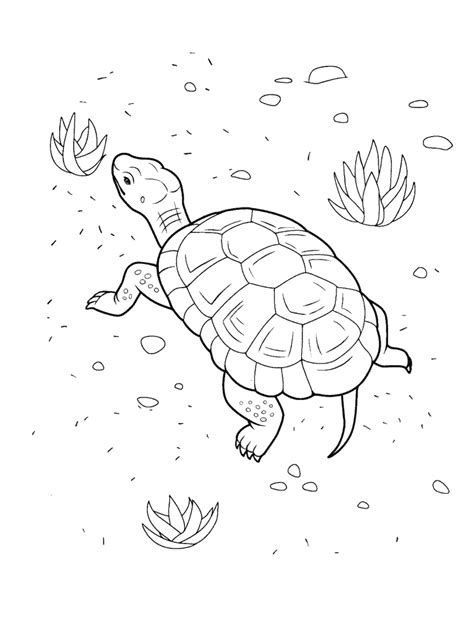 Coloring page - Turtle on the Beach