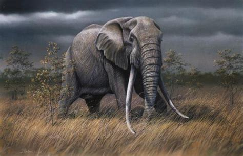 Alan Ainslie - South African Wildlife artist and